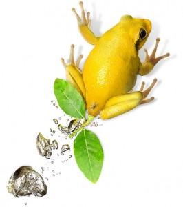 Гайда Евгения Лягушка-лимон